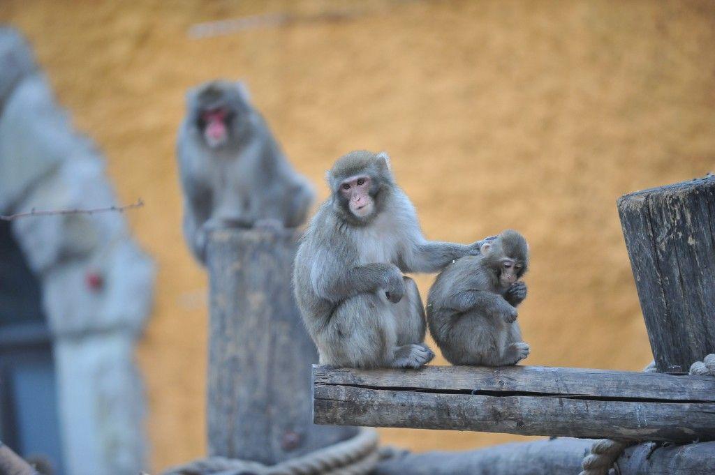 Москвичи узнают, как жилось столичному зоопарку в годы Великой Отечественной войны
