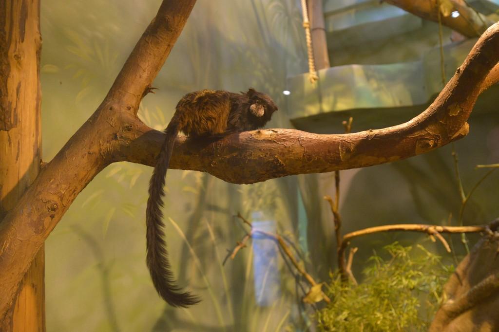 Сезон «Теплых экскурсий» открылся в Московском зоопарке
