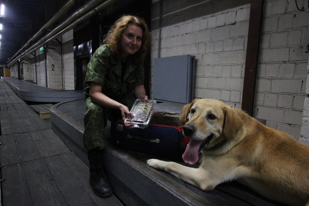 Собаки-психотерапевты успокоят пассажиров перед полетом