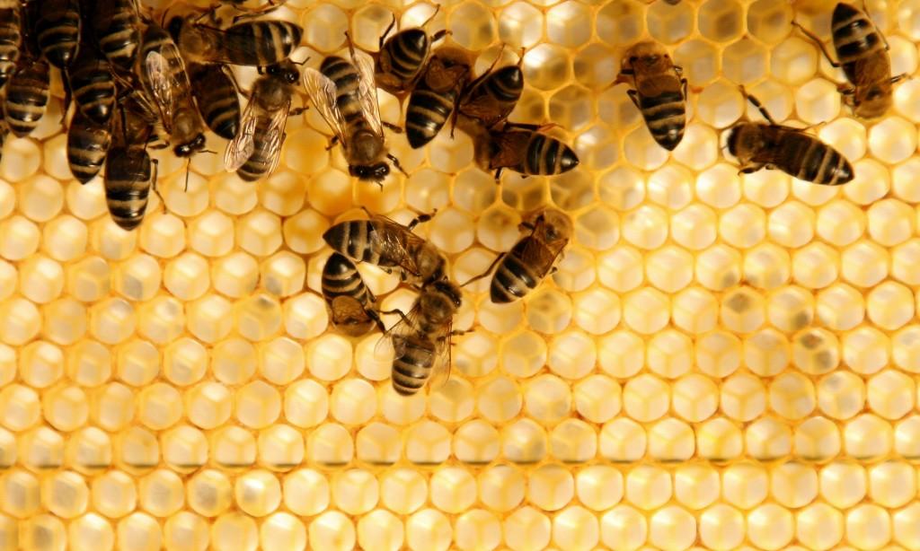 Аномальная зима: в Кузьминском парке проснулись пчелы