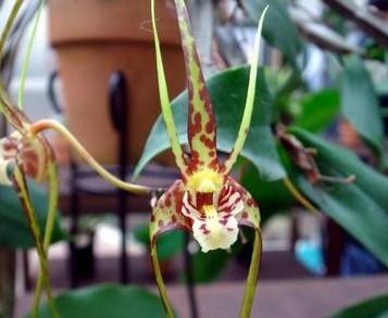 Посетители Аптекарского огорода могут увидеть редкие виды орхидей