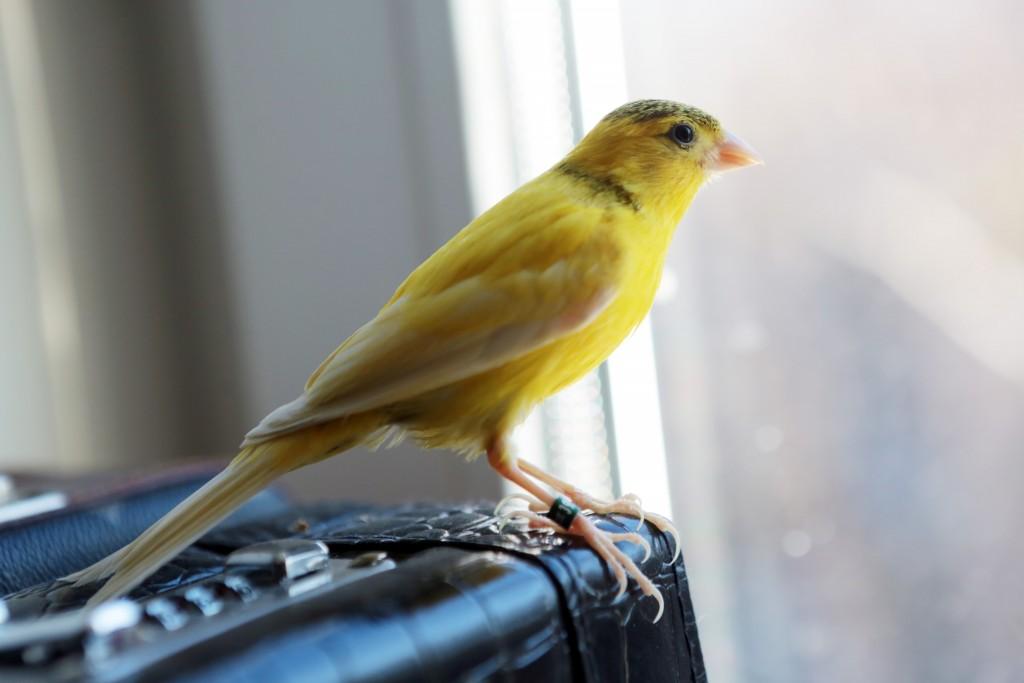 Московские парки 1 апреля отметят Международный день птиц