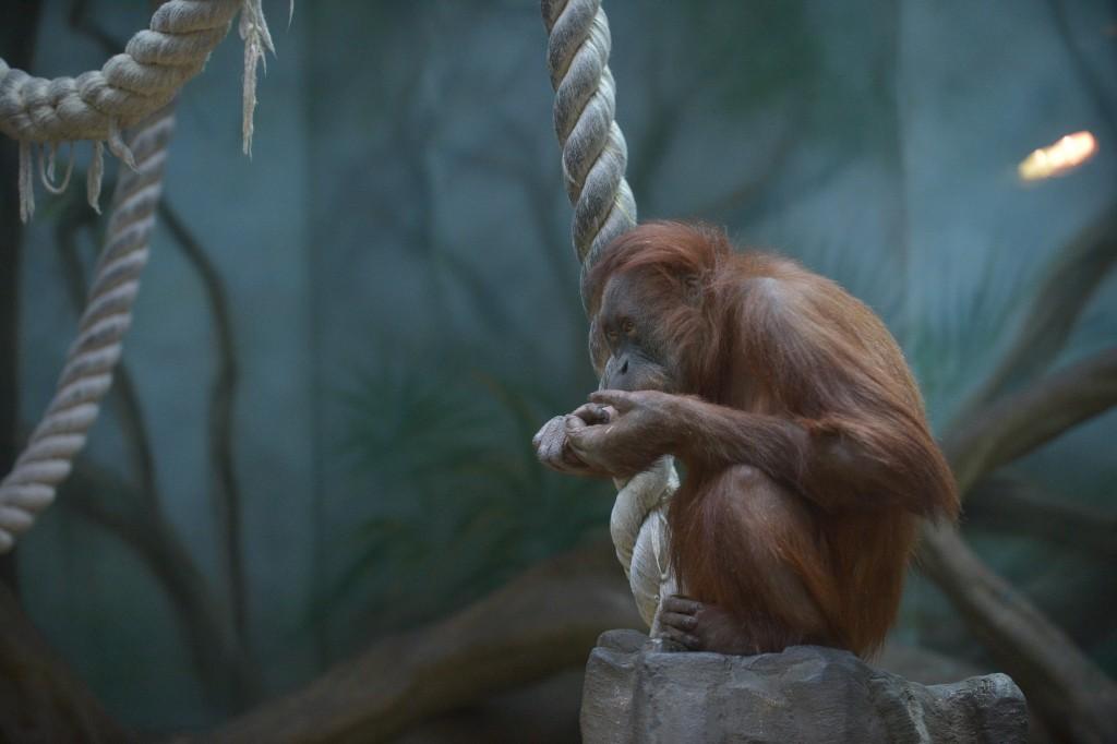 Московский Зоопарк отменит санитарный день