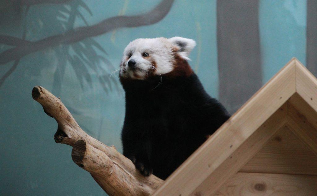 Московский зоопарк отменит санитарный день 13 июня