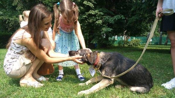 Собаки из приютов нашли новые дома на благотворительной выставке