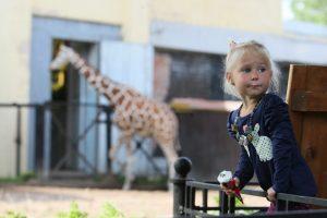 Зоопарк подготовил целый ряд мероприятий в честь Дня защиты детей. Фото: Наталья Пьетра, «Вечерняя Москва»