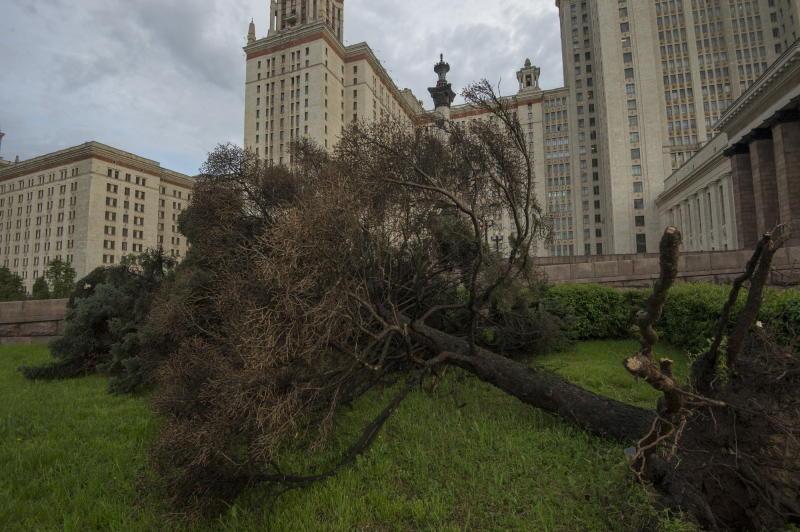 Улицы Москвы расчистили от поваленных деревьев