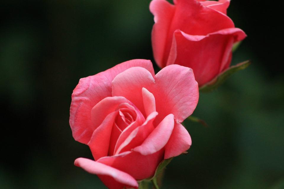 Около 50 автобусных остановок в пределах Садового кольца украсят розами