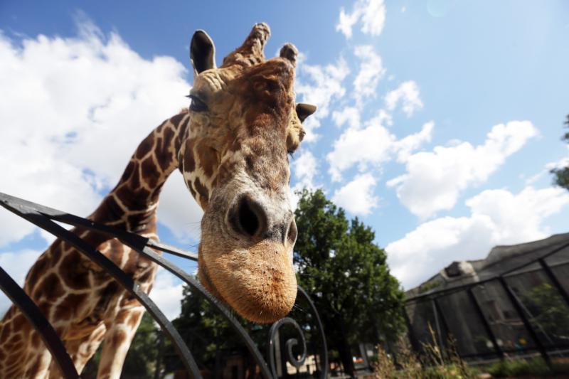Московский зоопарк подготовил ко Дню России развлекательную программу