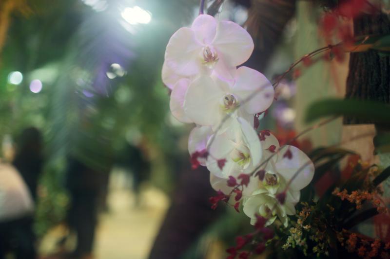 Розы и декоративные кустарники покажут в «Аптекарском огороде»