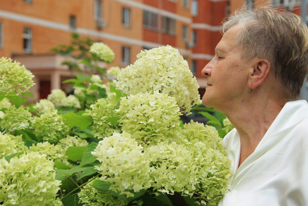 Розы и гортензии жители выращивают всем двором