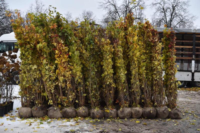 Новые растения получит район Якиманка