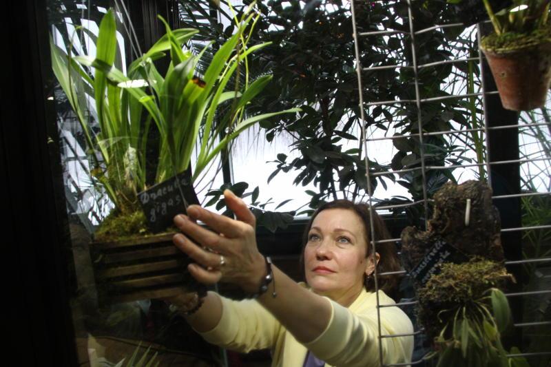 Трехсотлетнюю лиственницу спасли от гибели специалисты «Аптекарского огорода»