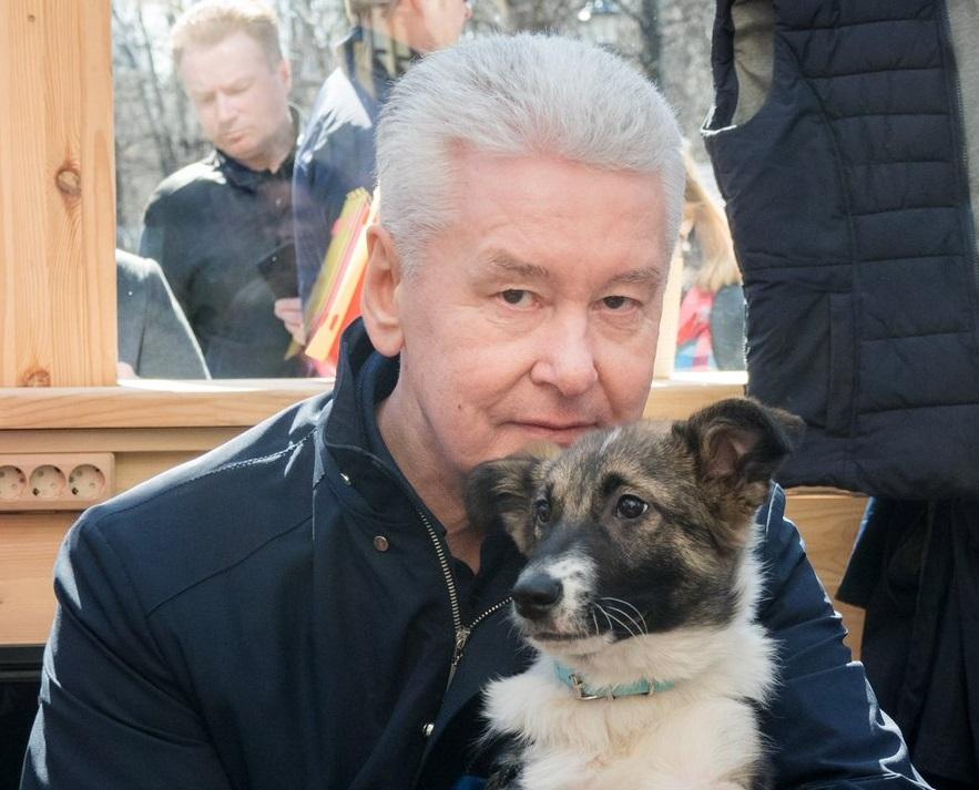 Собянин взял домой питомца из приюта для собак