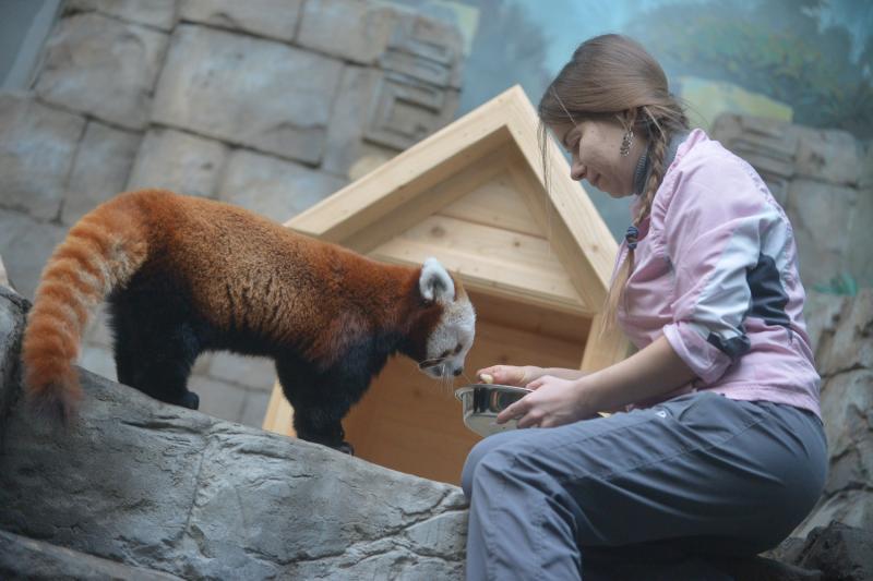 Гости зоопарка в Москве смогут кормить животных спецкормом