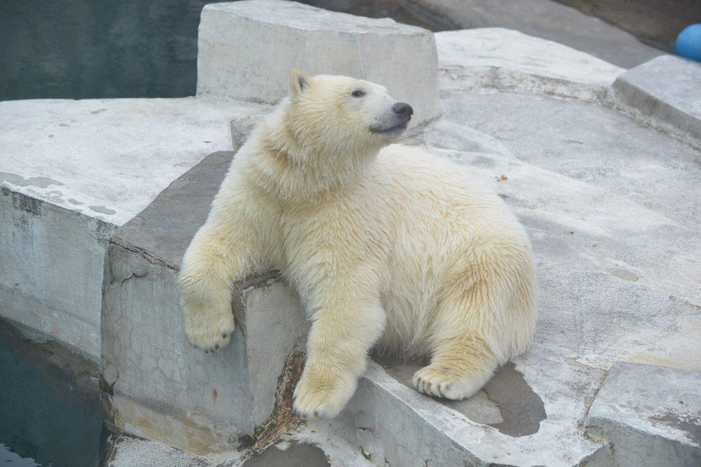Питомцев Московского зоопарка спрятали от жары