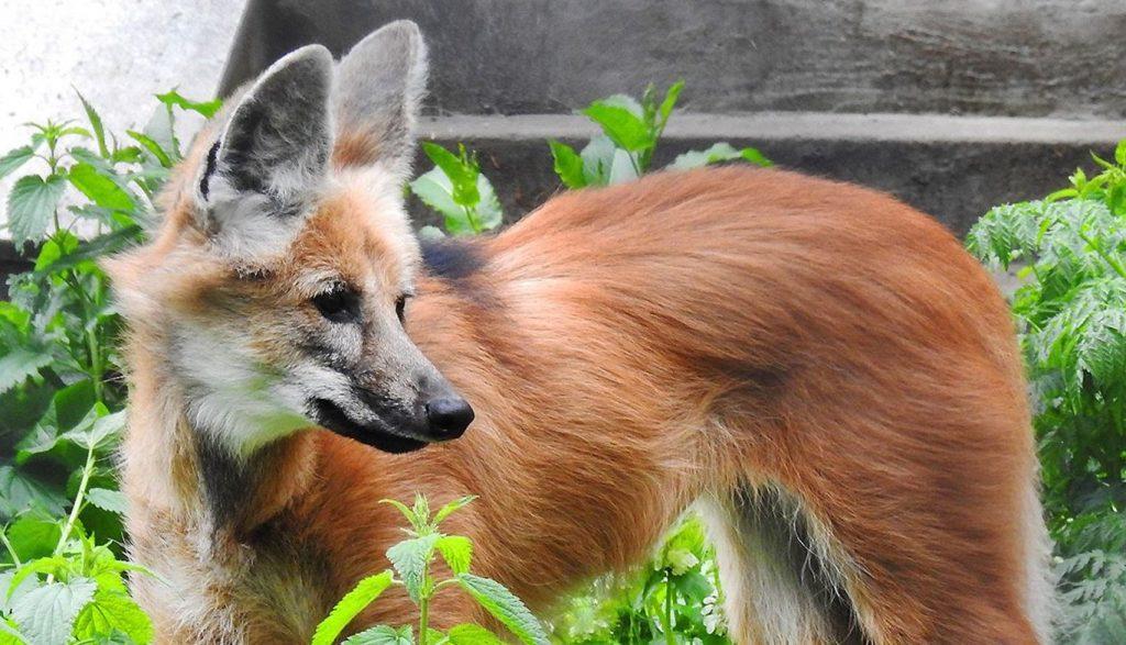 Фосса и секретарь: Московский зоопарк анонсировал пополнение