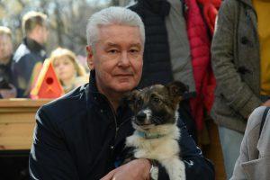 Сергей Собянин рассказал о жизни щенка Джоуи. Фото: Владимир Новиков, «Вечерняя Москва»