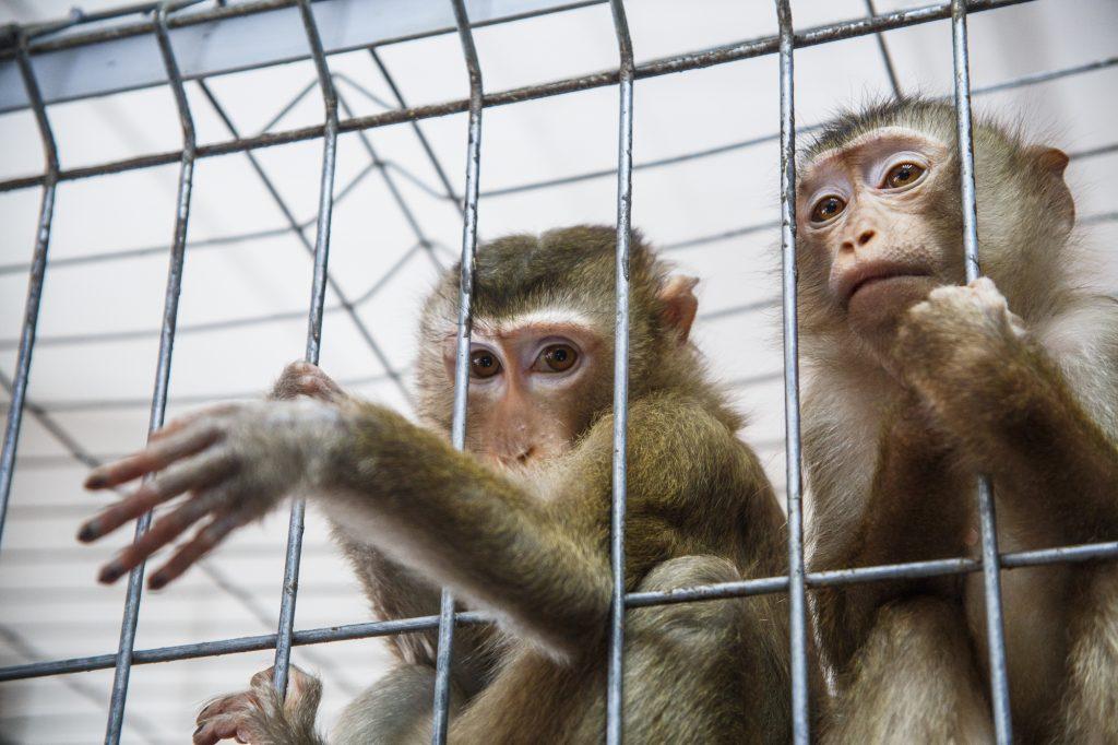 Жара: Московский зоопарк начал раздачу мороженого питомцам