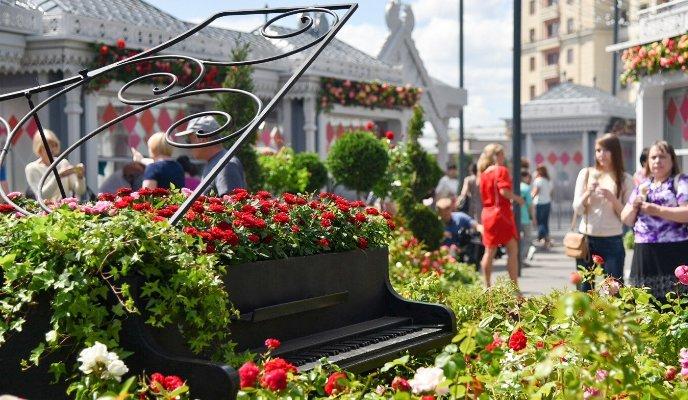 Более четырех тысяч кустов крымских роз высадят на площади Революции