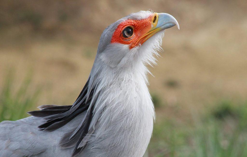 Птица-секретарь поселилась в Московском зоопарке впервые за 30 лет. Фото: сайт мэра Москвы