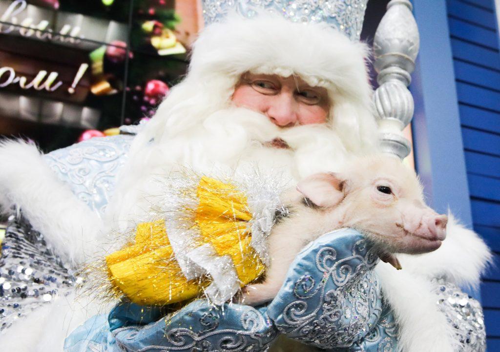 Фотофакт: Дед Мороз из Великого Устюга в Московском зоопарке
