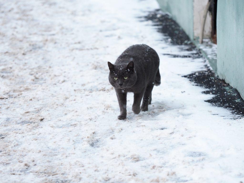 Москвичей ждет холодная пятница