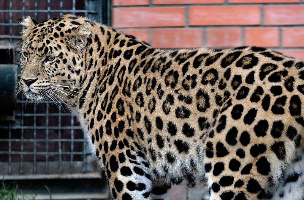 Два павильона Московского зоопарка закроют на ремонт