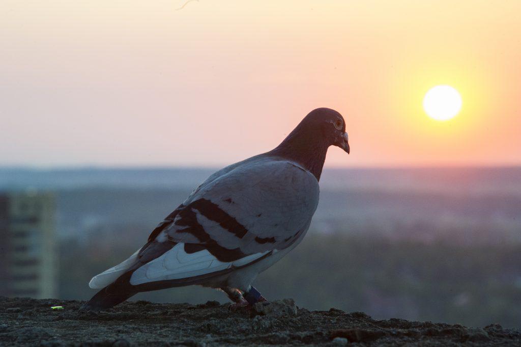 Московских птиц накрыла депрессия из-за погоды