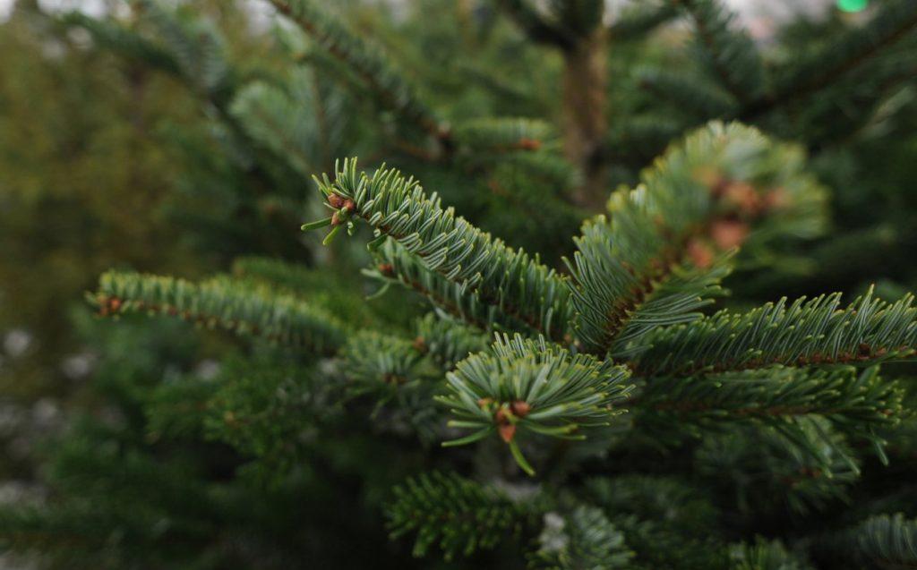 Москвичи смогут сдать елки на переработку в 13 столичных парках. Фото: сайт мэра Москвы