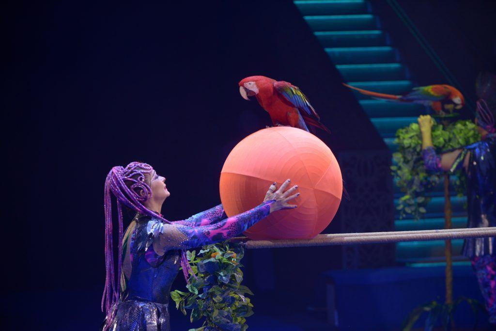 Московский орнитарий придумал, что делать с попугаем-неврастеником