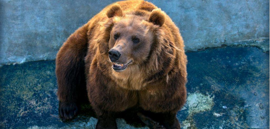 Медведи Московского зоопарка проснулись на «Острове зверей»