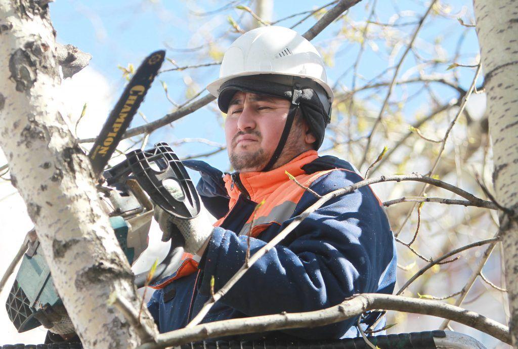 24 апреля 2018 года. Рабочий Абубакир Коконов удаляет дерево на улице Школьной (Таганский район), срезая его по частям. Фото: Наталия Нечаева