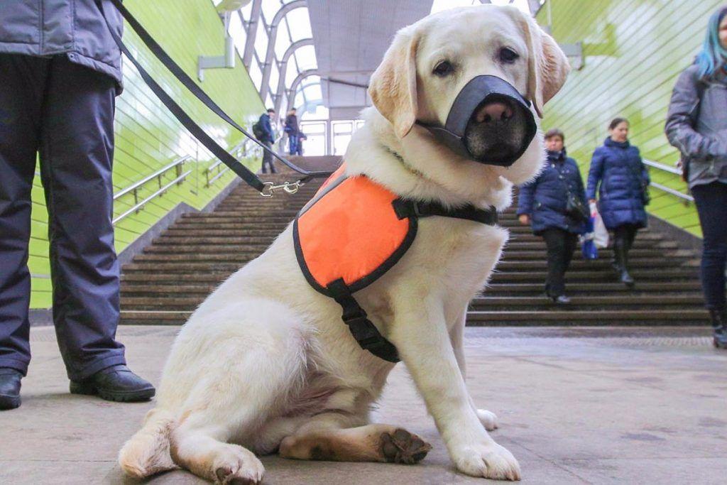 Акцию «День с собакой-проводником» устроят в центре Москвы