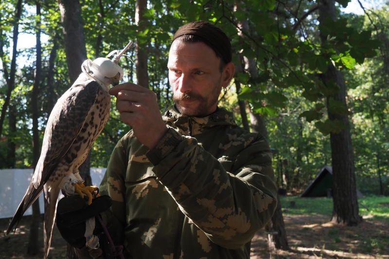 Москвичей попросили не кормить молодых соколят-пустельг. Фото: Антон Гердо, «Вечерняя Москва»