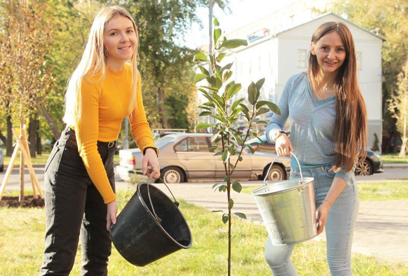 Деревья и кустарники высадят в Красносельском районе