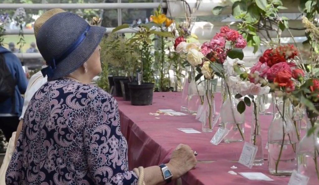 Выставка роз состоялась в центре города