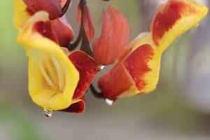 Растение распространено на юге Америки и Азии. Фото: pixabay.com