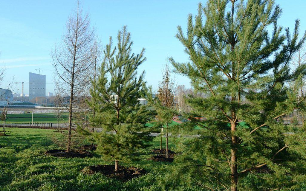 Работы по озеленению начали в Мещанском районе