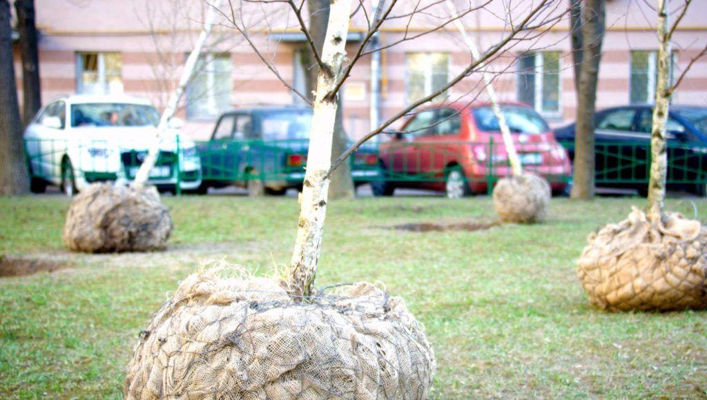 Работы по озеленению завершили в Мещанском районе