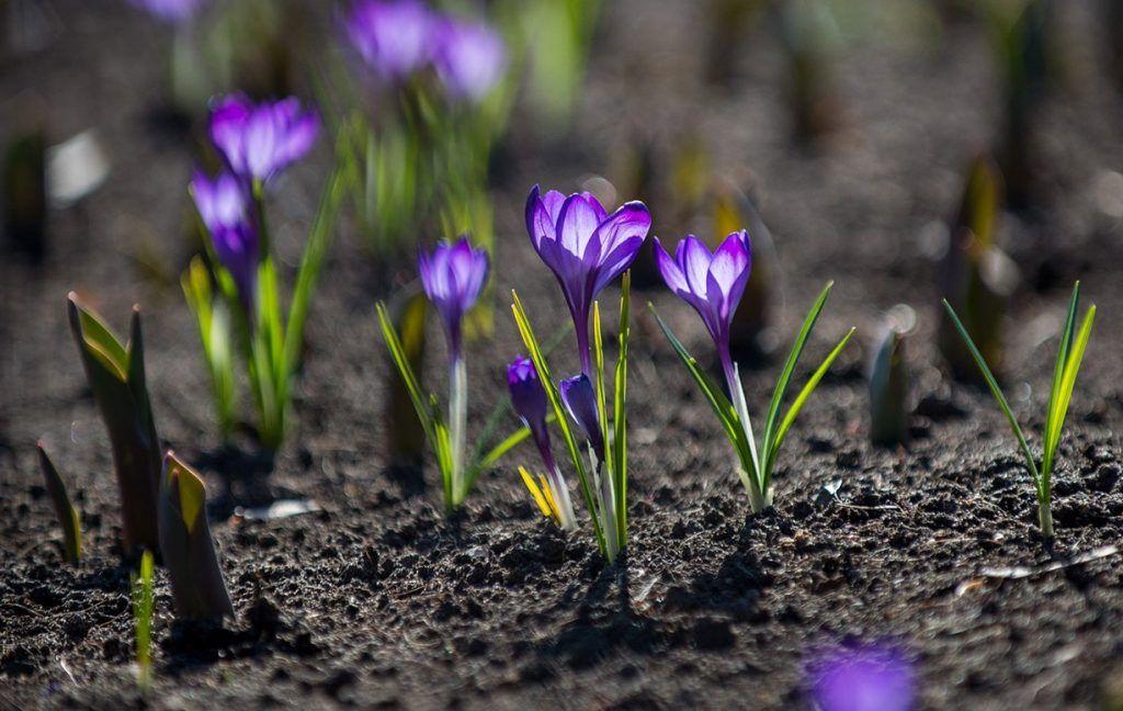 Около 270 тысяч растений высадят в Парке Горького и Нескучном саду