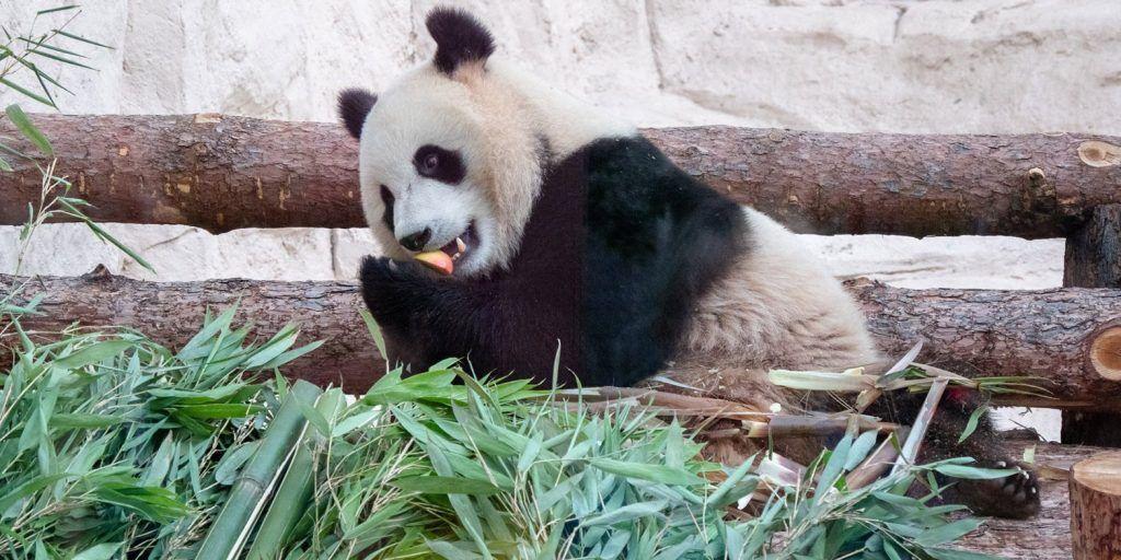 Собственный видеоблог появился в Московском зоопарке. Фото: сайт мэра Москвы