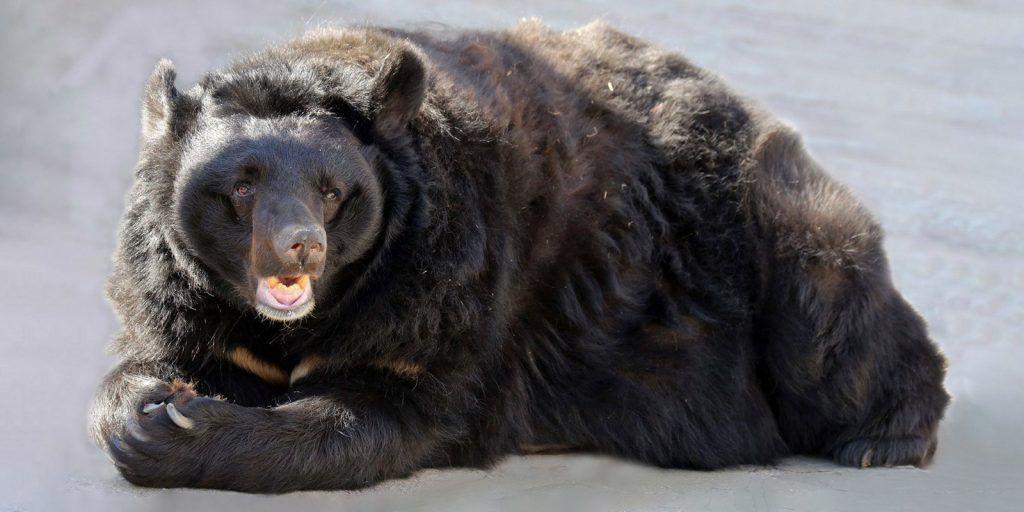 Три медведя ушли в спячку в Московском зоопарке