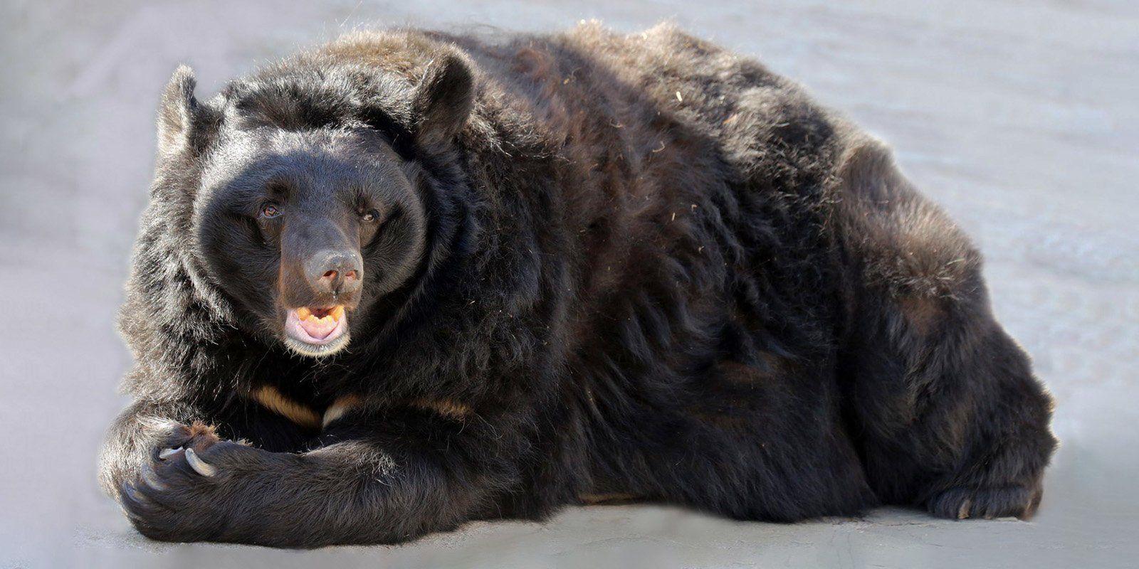 Три медведя ушли в спячку в Московском зоопарке. Фото: официальный сайт мэра Москвы