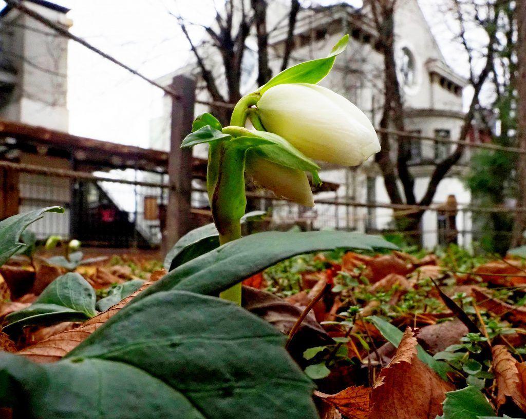 Фотофакт: весна пришла в «Аптекарский огород»