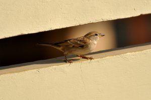 Птицы чувствительны к электромагнитному излучению. Фото: pixabay.com