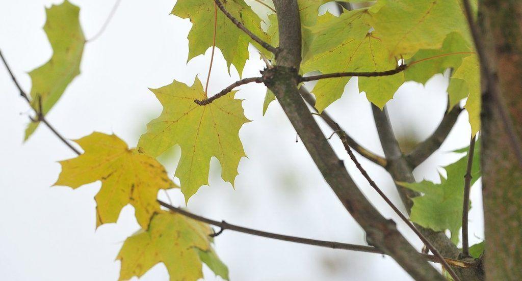 Свыше семи тысяч растений высадили осенью в Таганском районе