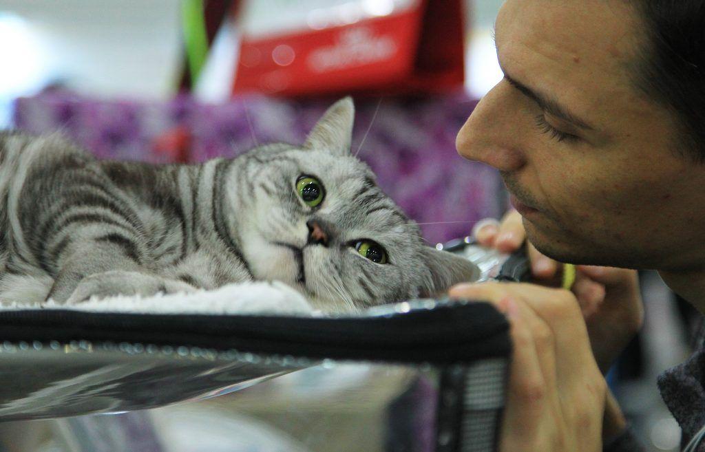 Стать хозяином кота — дело серьезное