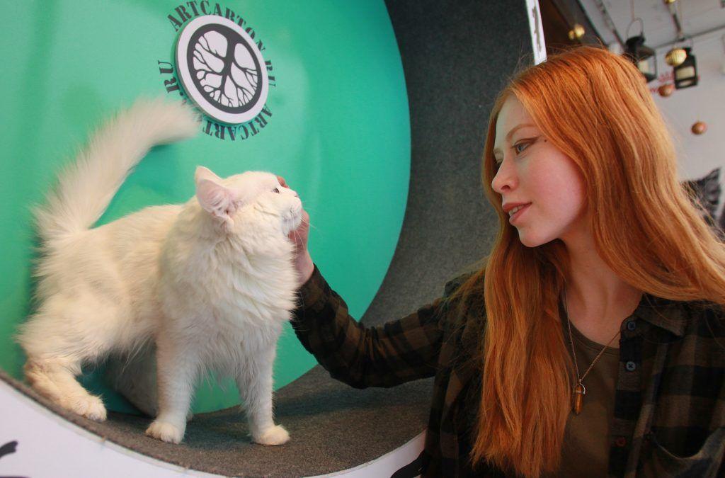 Москвичам посоветовали не целовать котов