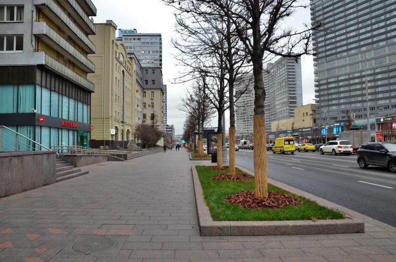 Около 1200 деревьев высадили в Москве за осенний период